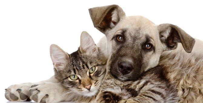 猫と犬を一緒に飼う注意点