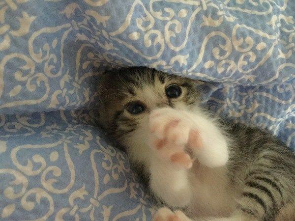 「ありがたいニャー」猫が感謝している時のサイン5つ