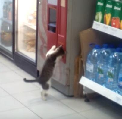 「小銭はどこにゃ!?」自販機の返却口でガサゴソする猫…これがホントのネコババ!?