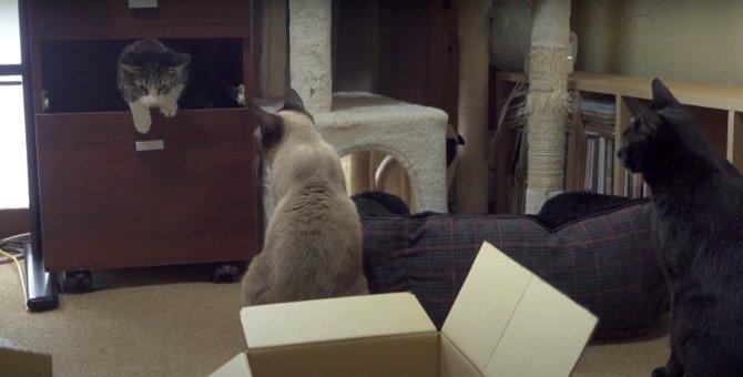 箱の中には何が?猫ちゃんたちの宝探し♡