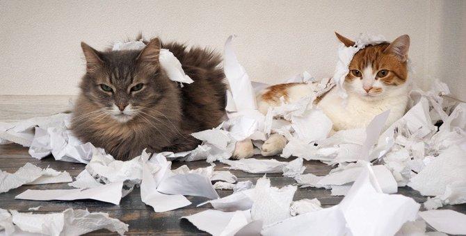 猫がティッシュを食べたがる5つのワケ