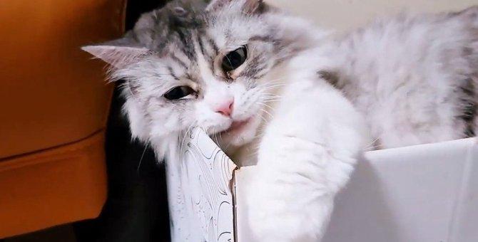 箱から前足が!飼い主さんにちょっかいを出される猫さん!