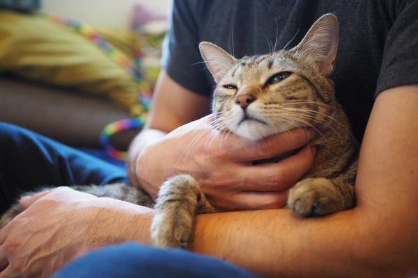 猫がパートナーと認めている人にしかしない行動5つ
