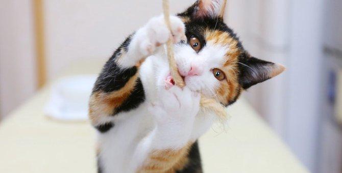 猫が「遊んで欲しい」と思っている時の6つの仕草