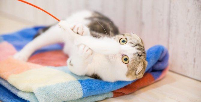 猫はどんな猫じゃらしが好き?5つの特徴