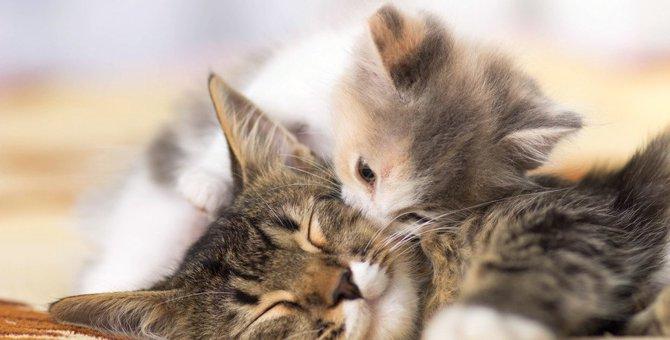猫からイヤな匂いがする原因6つ!対策できる6つの事
