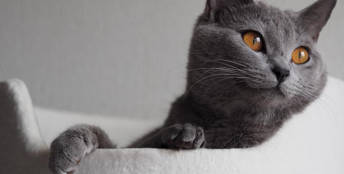 猫の完全室内飼いがオススメな11の理由