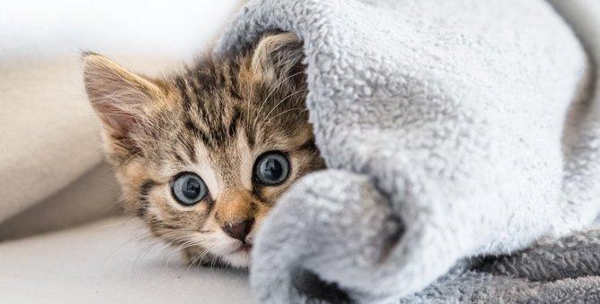 猫がスプレーをする原因や対処法、おすすめグッズまで