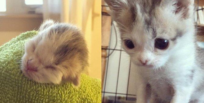野良猫が庭で出産、母猫に育児放棄された子猫たちを保護したものの…
