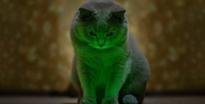 猫に『レーザーポインター』を使う時の絶対NG行為3つ