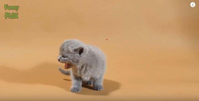 ニャン、ミャー、ナー。可愛すぎる猫の鳴き声コンプリート♡※音出し推奨