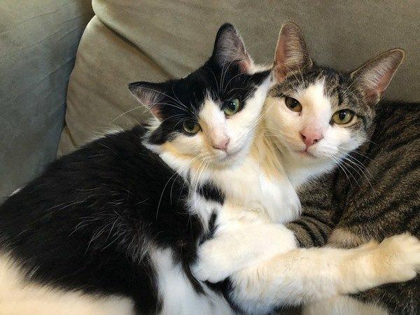 猫団子の謎…猫が重なって眠る3つの理由