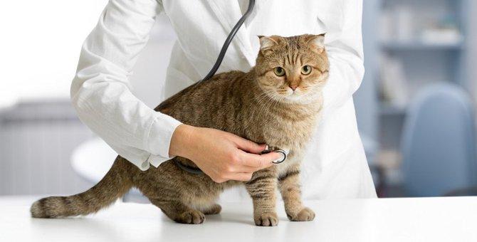 猫の年齢別『三大死亡原因』まとめ!早期発見のため健康診断は欠かさずに!