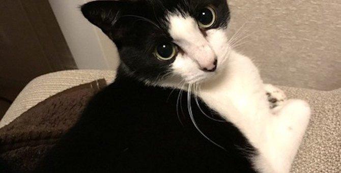 猫と『意思疎通』するために飼い主がやるべきこと3つ