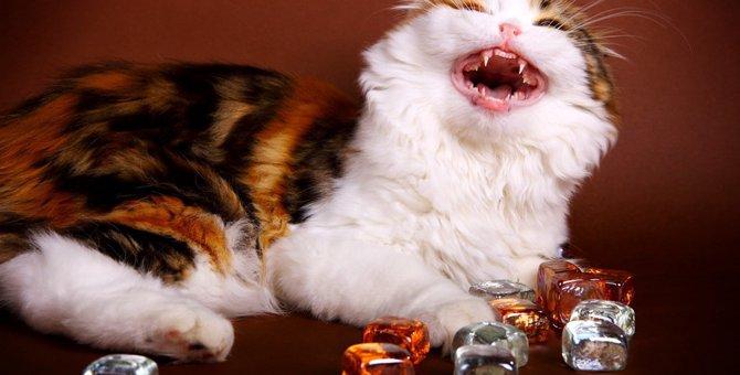 猫に氷を与えても大丈夫?なめさせる時の注意点