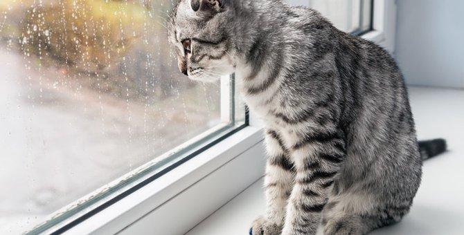 猫が梅雨にかかりやすい皮膚病と3つの対策