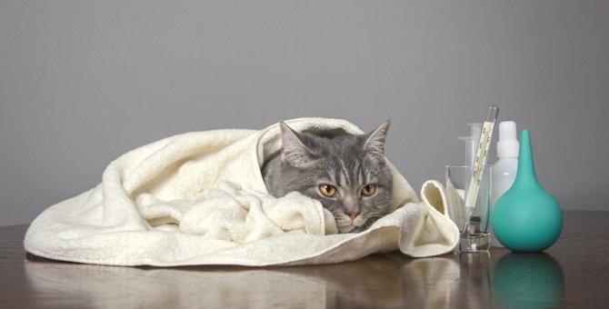 猫が低体温の時真っ先にすべき対処と考えられる病気