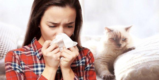 猫の飼い主が猫アレルギーの人と会う時に準備すべきこと3つ
