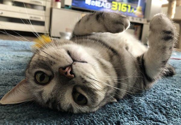 猫と人が快適に暮らせる部屋の特徴5つ!お互いにとってより良い環境とは?