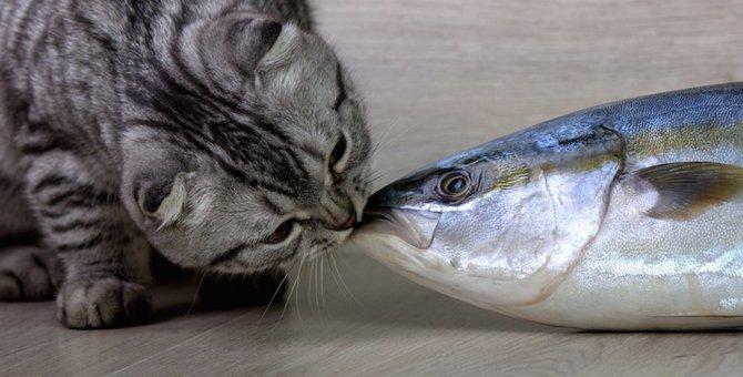 猫に魚は間違い!食べてはいけない魚7選