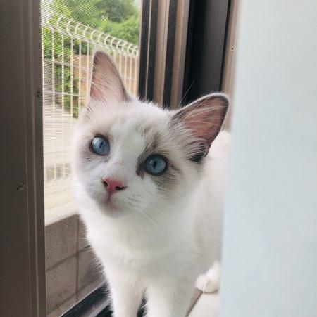 猫を家に置いて外泊しても大丈夫?