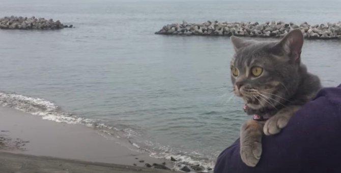 おっかなびっくり、海でお散歩する猫ちゃんが可愛い!