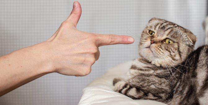 猫をしつけで叩くことの危険性と正しいしつけ方