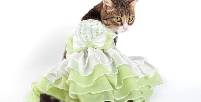 猫服を着せる理由 ~こんな時は着せた方がいい~