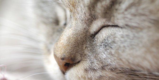 猫の鼻が乾燥している時の対策と予防する方法