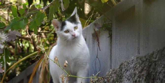 原発事故被害の飯舘村で保護。無人村で生まれ育った猫が幸せに