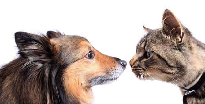 猫が『鼻をヒクヒク』する5つの理由!気をつけたい病気のサインとは?