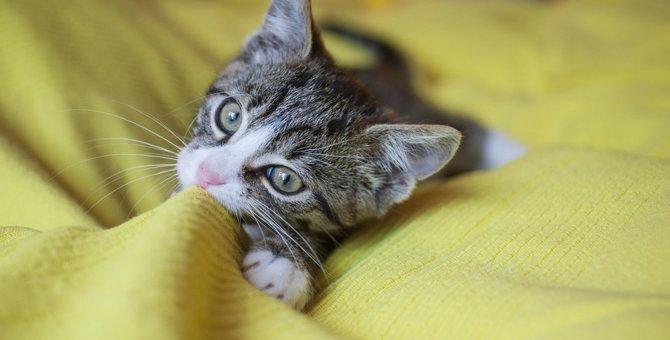 猫がタオルや布をちゅーちゅー吸うときの心理3つ