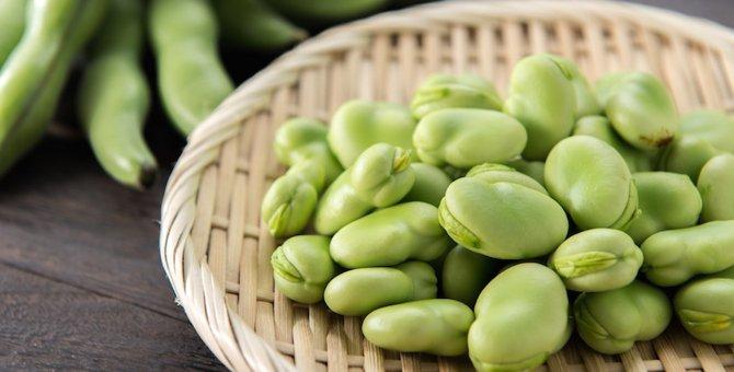 猫はそら豆を食べられる?効果や注意点