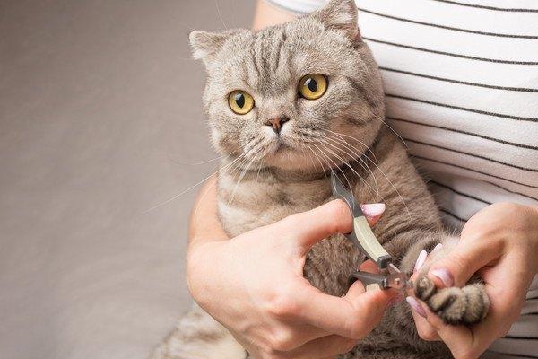 猫に爪切りは必要なの?頻度や嫌がる場合の安全な切り方