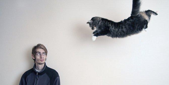 猫のテンションが上がる5つの事
