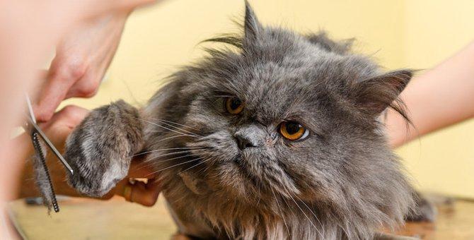 毛の長い猫には暑さ対策は必須!飼い主がしてあげられる事