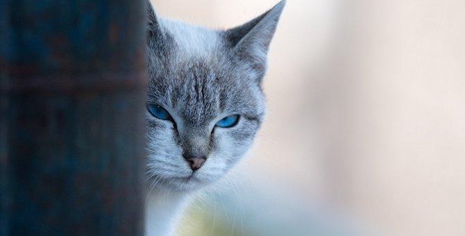 猫が急に冷たい態度を取る理由5つ