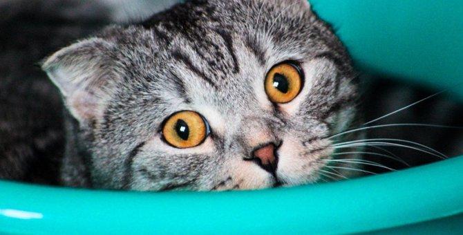 【危険】家の中で猫に起こりがちな事故6つ