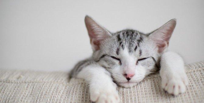猫にやりすぎるとNGなお世話5つ