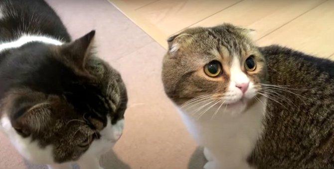 『おやつちょうだいニャ〜』もらえなくて拗ねちゃった猫ちゃん