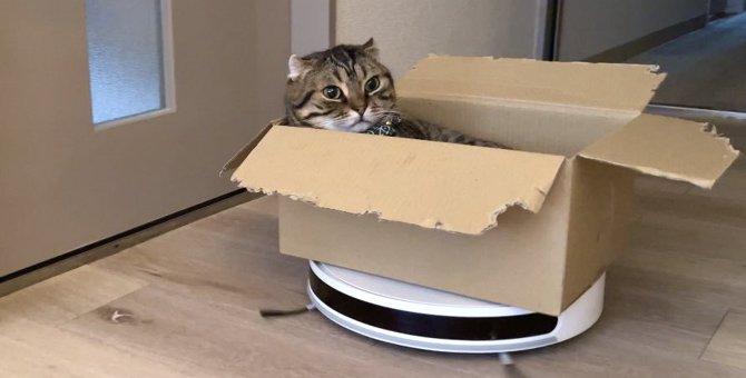 面白可愛い!お掃除ロボライダー猫に起こった悲劇に27万人が悶絶!