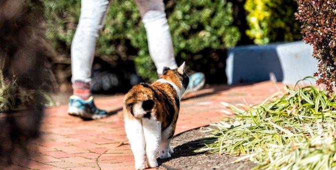猫が飼い主を『後追い』するときの心理3つ