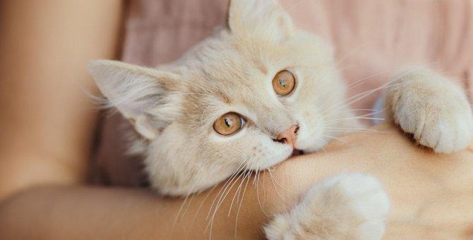 猫が『噛む』のはどんな時?4つの心理と対処法を解説