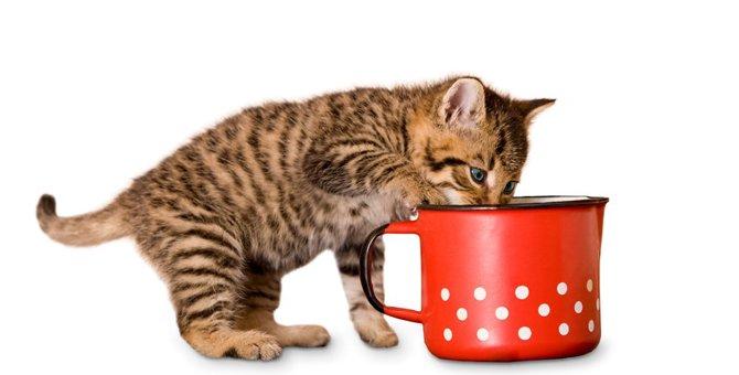 猫用スープおすすめ5選!選び方や作り方その理由まで