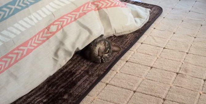 気づかれない猫ちゃんと気づかれたくない猫ちゃん