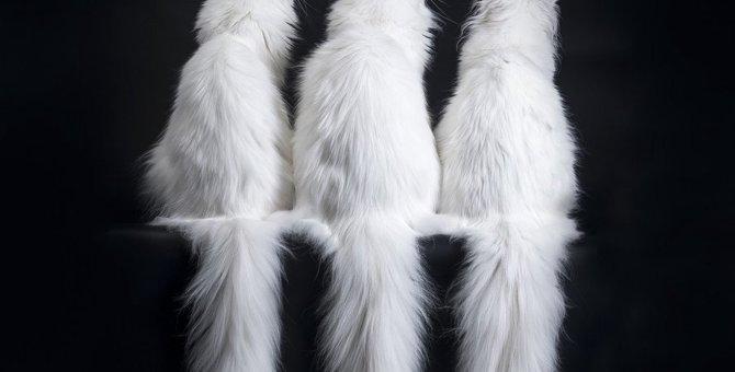 猫が尻尾を触ると怒るのはなぜ?4つの理由