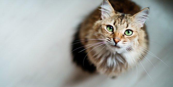 猫を『嫌われちゃった』と落ち込ませてしまう行為3つ