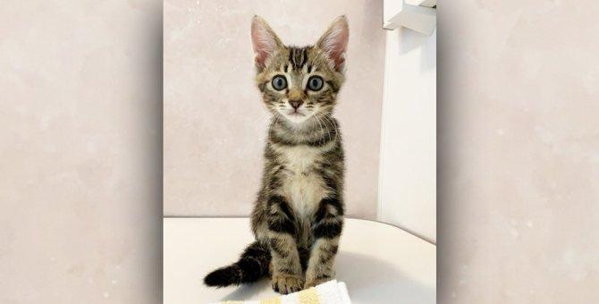 飼い主の入浴に付き添う『お風呂が苦手な猫』の心理5つ