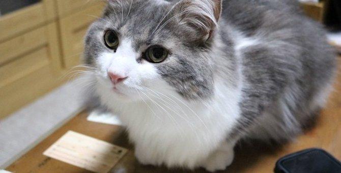 何度注意してもイタズラを繰り返す猫の心理4つ