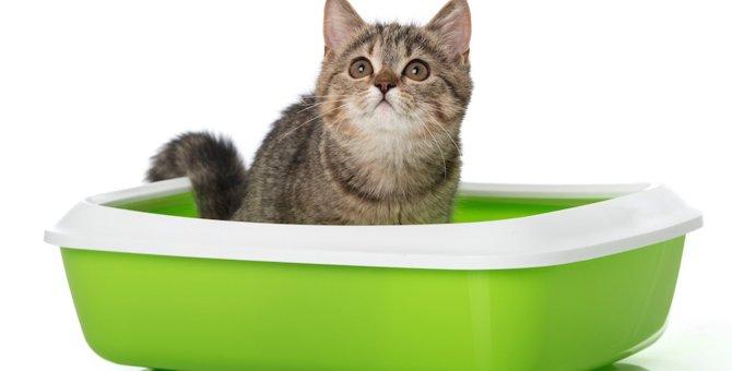 猫がトイレを覚えない時の正しいしつけの方法